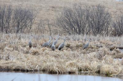 return of the cranes