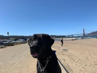 Leia y al fondo el Golden Gate