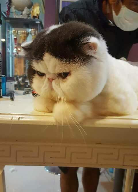 Comel sangat nih kucing pipi pau! Grrrr ~ Wordless Wednesday