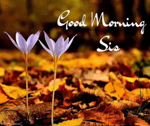 good morning sis with flowers