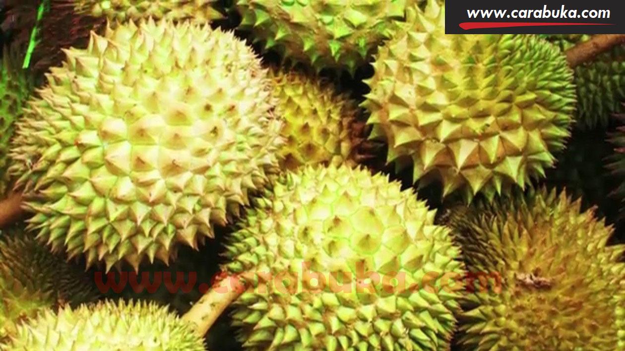 Tips Cara Memilih Durian Matang dan Manis 4