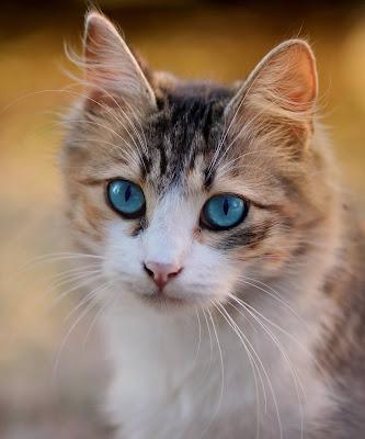 kedilerde kabızlık neden olur