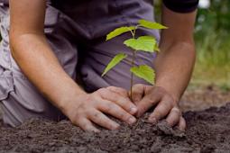 Hak dan Kewajiban Terhadap Sumber Daya Alam, Tema 9, Subtema 2, Pembelajaran 4