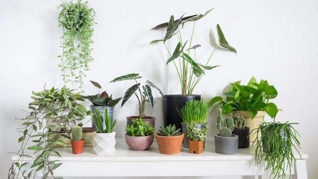 plants-plants_in_home-flower-how_to_care_of_home_plants-garden-green_beauty-nature