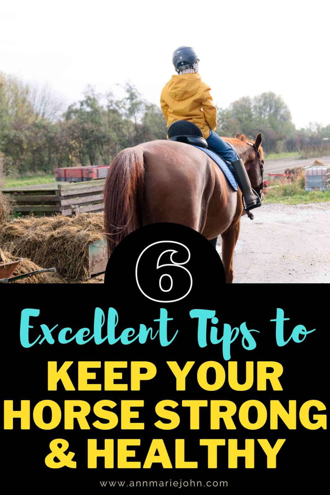 Tips That Will Keep Your Pet Horse Strong and Healthy