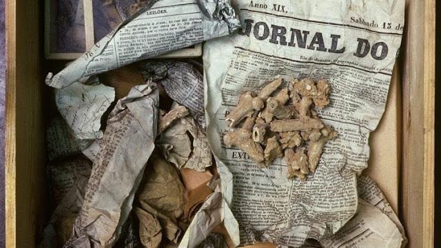 Ancient owl vomit helps researchers unpack prehistoric bone secrets