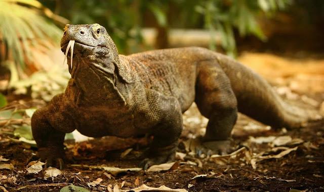 Top 7 tập tính thích nghi kỳ lạ của động vật hoang dã