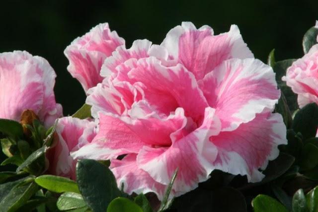 5 Flores para dar de presente