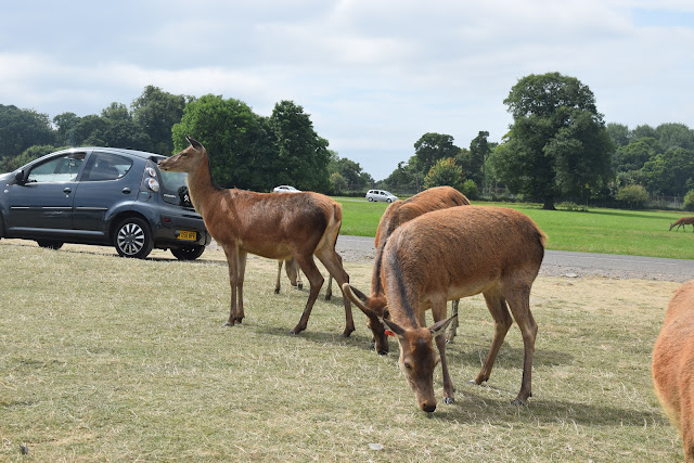 Longleat Safari Park, Days out, family fun, travel, family travel, deer, deer park, feed deer,