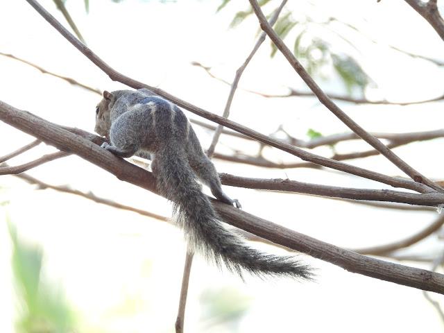 Squirrel - 6