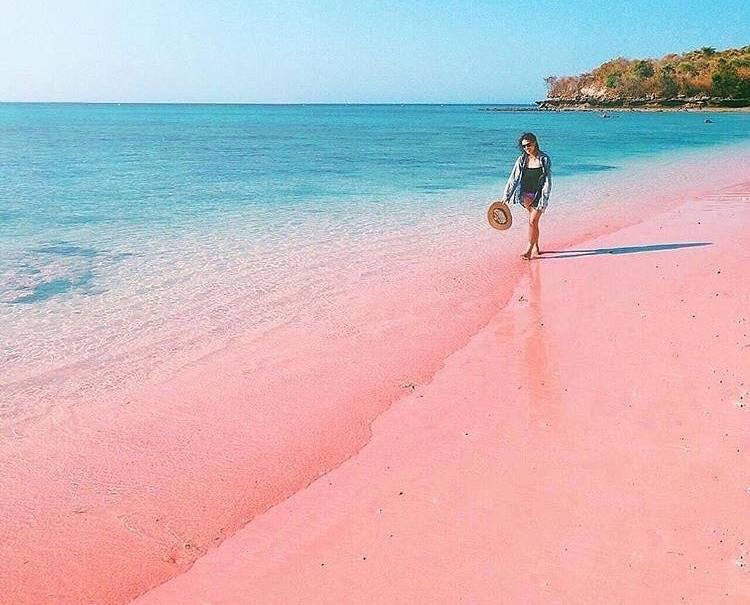 Gambar 7 Spot Pink Beach Lombok dan 6 Aktivitasnya
