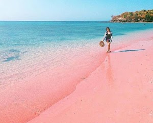 √ 7 Spot Pink Beach Lombok dan 6 Aktivitasnya