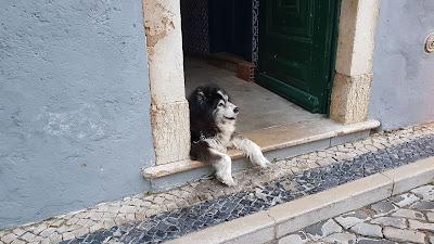 bel cane