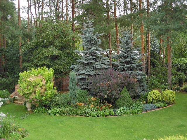 ogród w lesie sosnowym