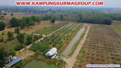 kampung-kurma-jonggol-ke-kebun-kurma-thailand
