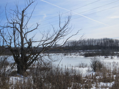 stark wetland scene