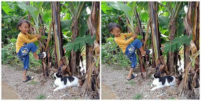 anak bermain kucing