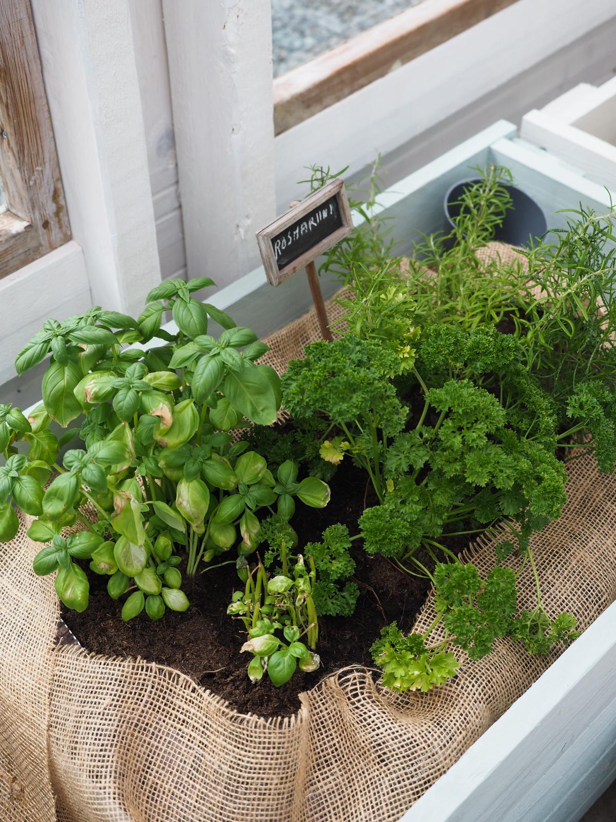kasvilaatikot kasvihuoneeseen