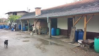 Local, Rakia, House, Yambol,