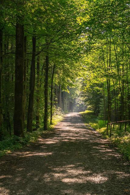 Wandertrilogie Allgäu | Etappe 03 | Bad Wörishofen-Mindelheim - Wiesengänger Route 13
