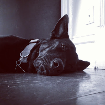 About A Dog: Geoffrey Bean by Patrick Valdez