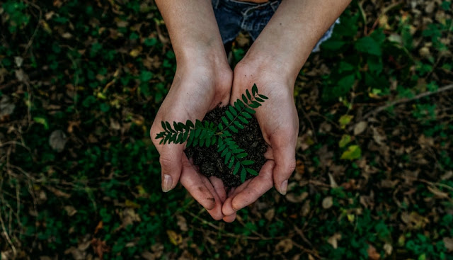 World Environment Day 2020 : Things that we should Learn from Nature