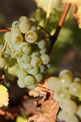 Do bonks in a vineyard