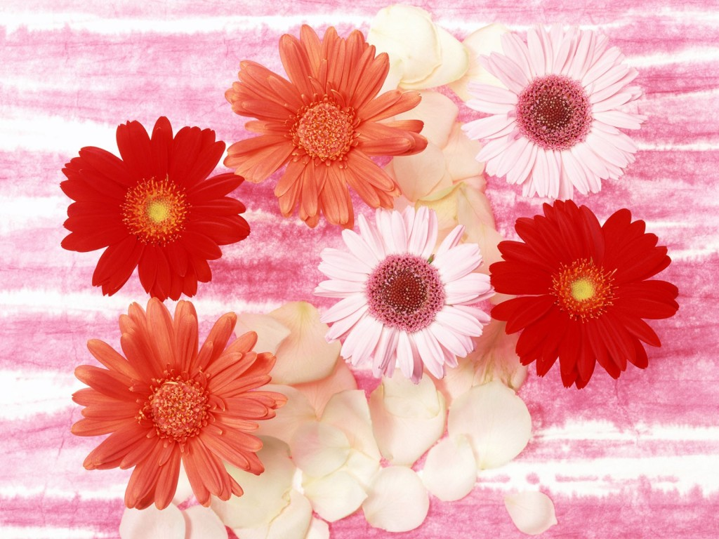 cool wallpapers: beautiful flowers