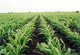 كتابة موضوع تعبير عن اهمية الزراعة في المجتمع