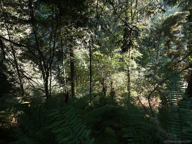 down to a leafy valley