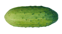 cucumber clipart png