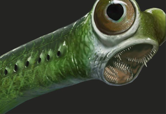 Conodonts: 520 Million Years Long in the Tooth
