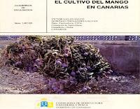 el-cultivo-del-mango-en-canarias