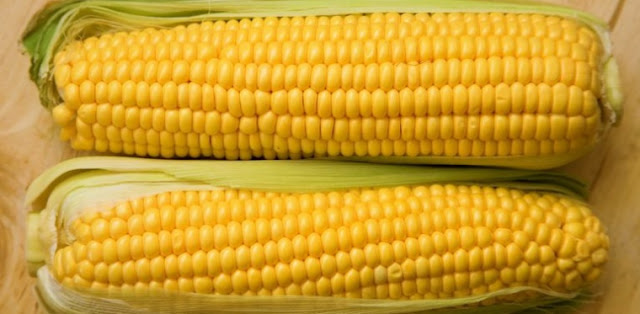 Maiz, almidon y biologia