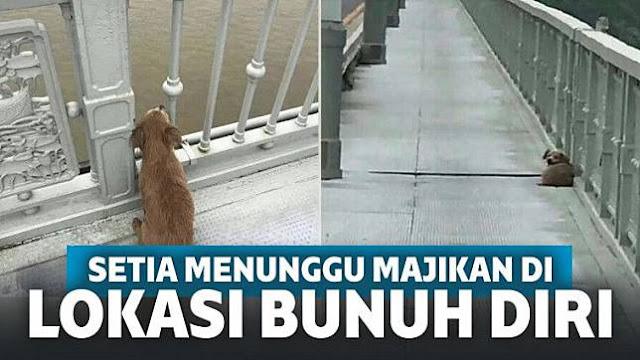 Anjing Ini Berdiam Diri di Lokasi Sang Majikan Bunuh Diri