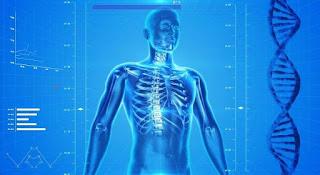anatomi-tubuh