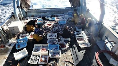 Pescaturismo Mallorca Los turistas disfrutan con las historias de los pescadores