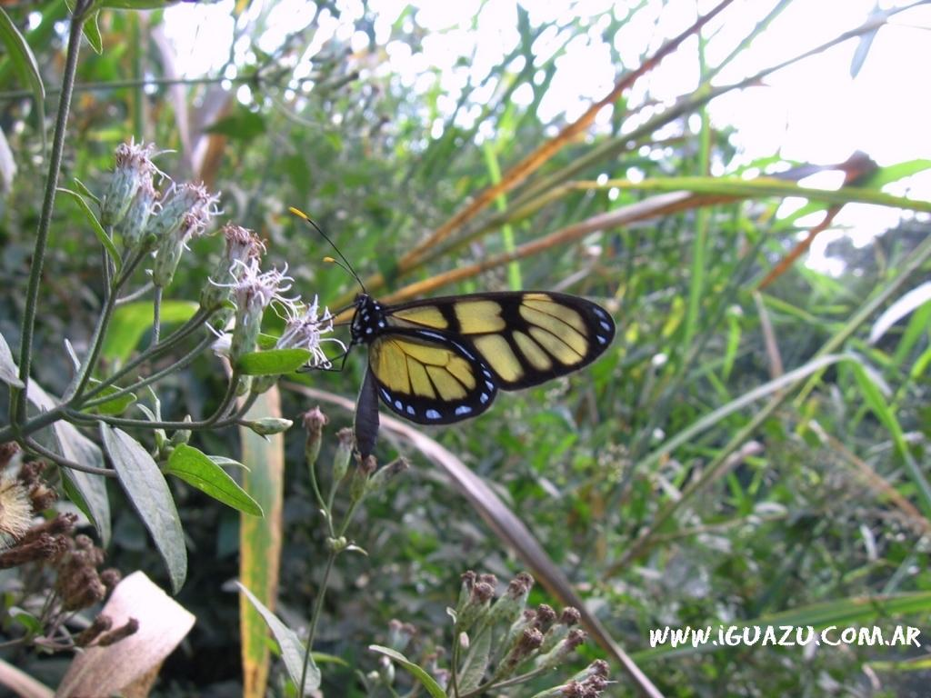 mariposa en tren de la selva