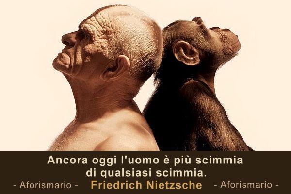 Immagini E Frasi Divertenti Con Scimmie Nyc