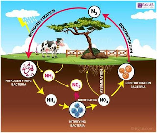 नाईट्रोजन चक्र जैव भूरासायनिक चक्र Biogeochemical cycle in hindi