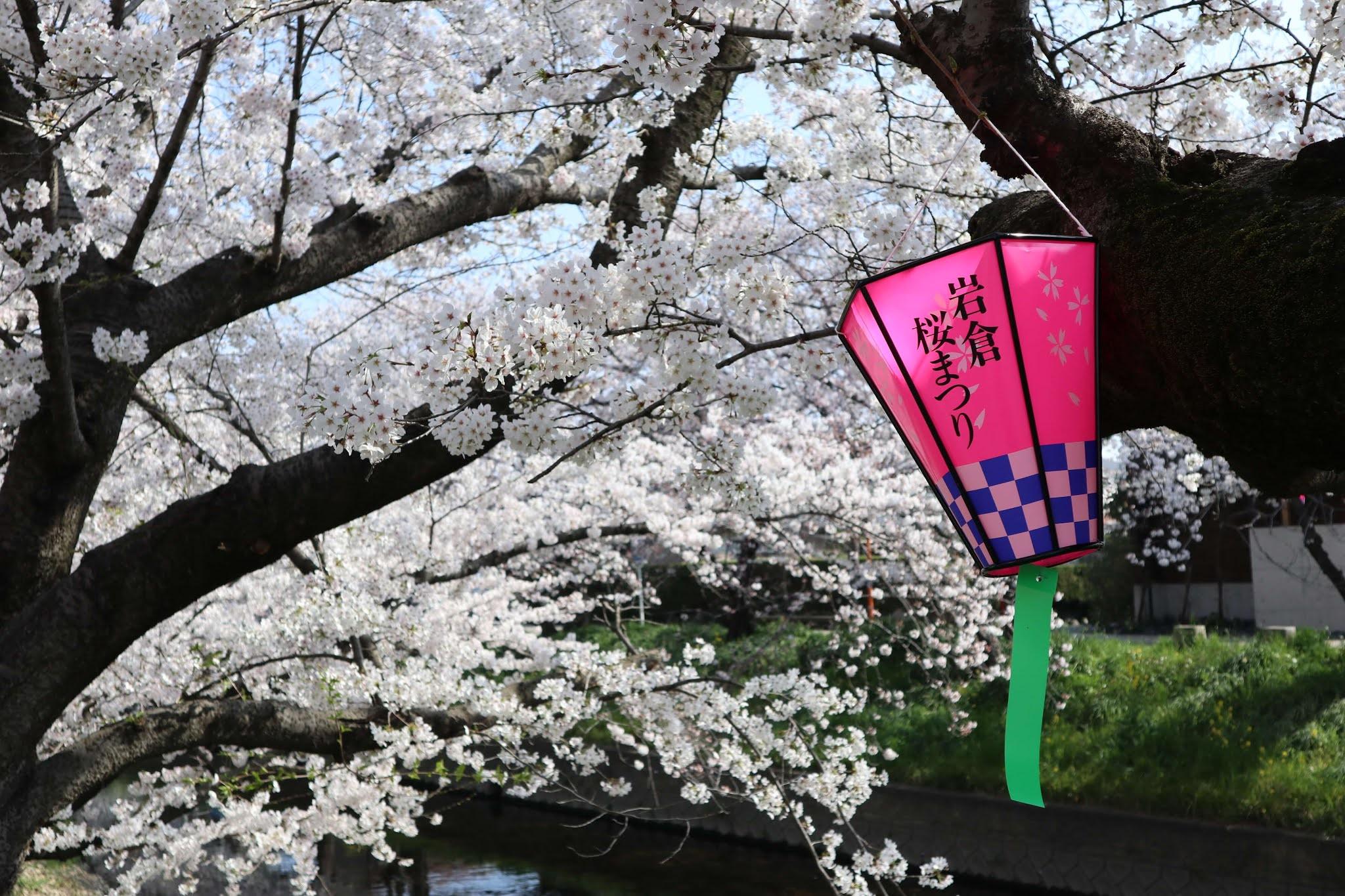 岩倉桜まつり4