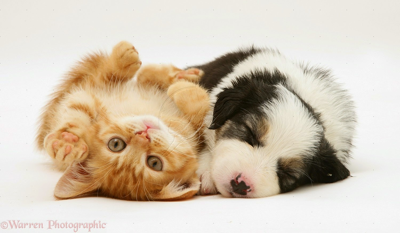 MYPETS Foto Kucing Lucu