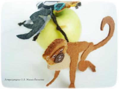 КОАПП, яблоко, мартышка, пестрокрылка