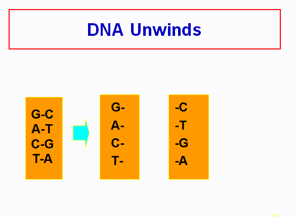 Structure of D.N.A,DNA  REPLICATION,rna and transcription,