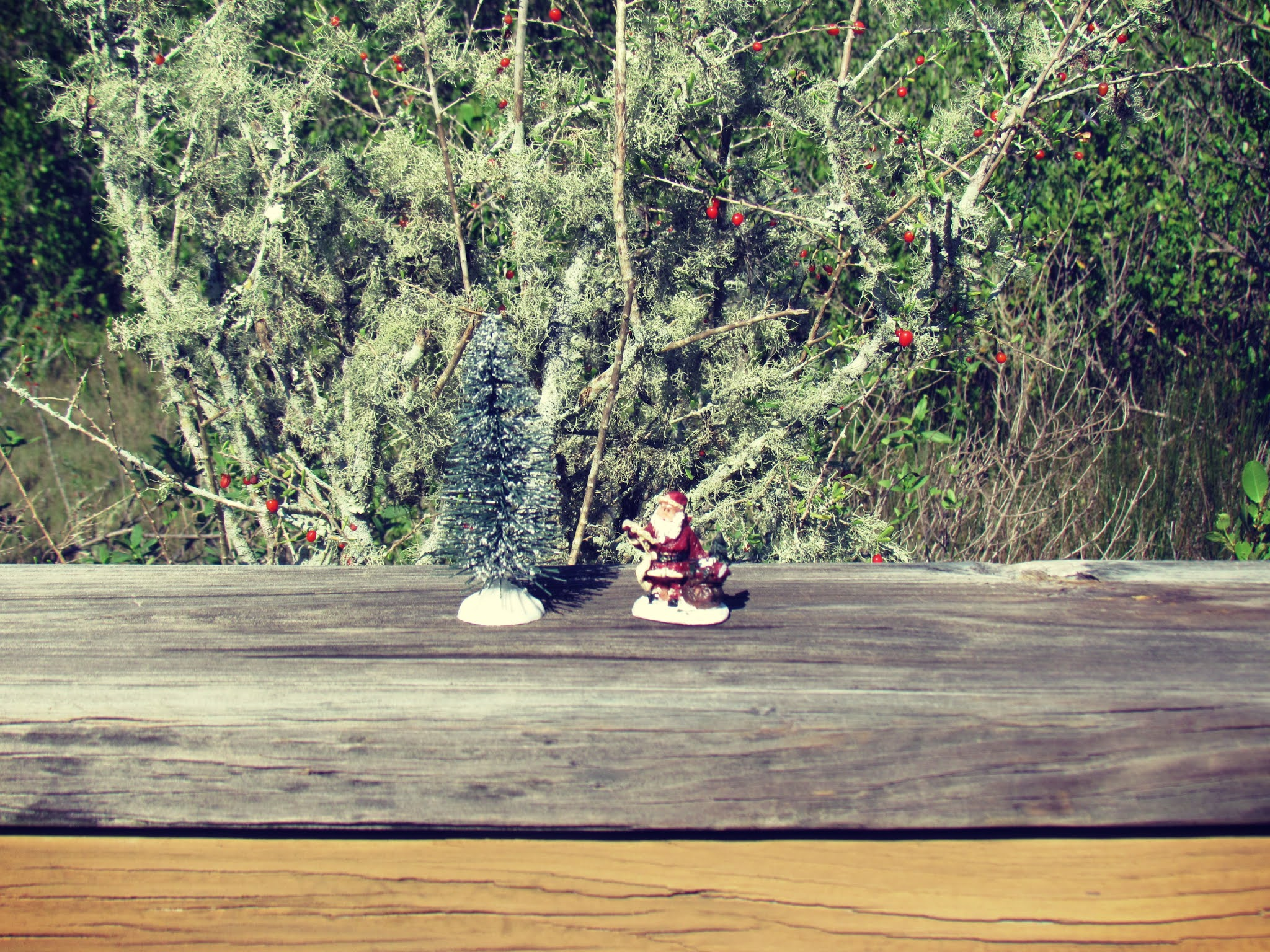Holiday plants and Christmas wreathes, holiday planters, Christmas figurines found in nature