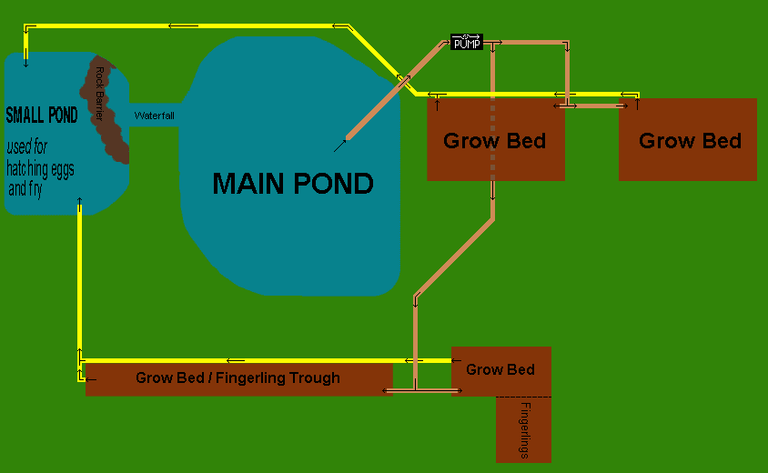 Backyard Biology A Backyard Aquaponic Pond System