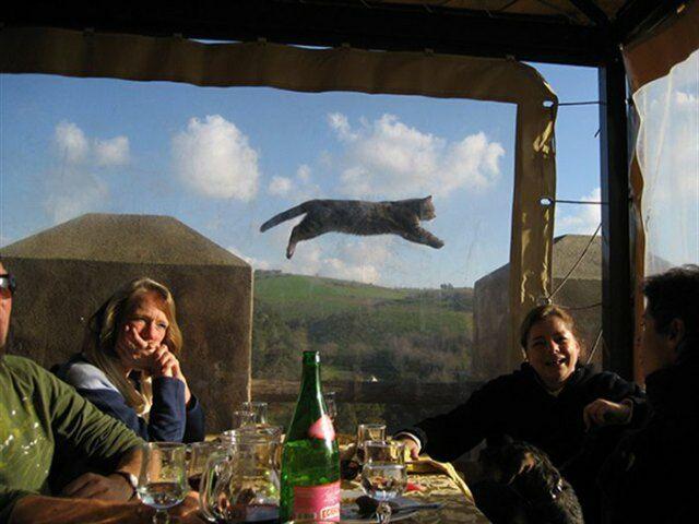 ТОП-10 Смешных Фото С Котами Которые Влезли В Кадр