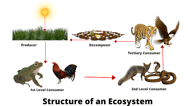 Structure of an Ecosystem and Stability