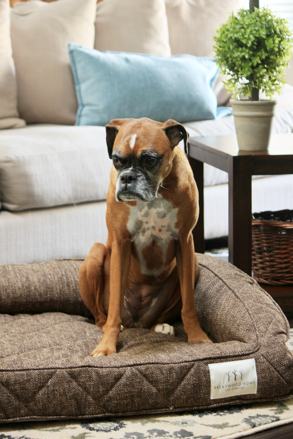 Dog Beds That Look Like Furniture Brentwood Home Runyon