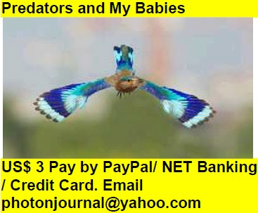 Predators and My Babies birds childrens snake loving mother